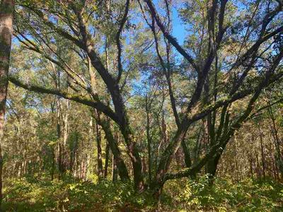73 E 4TH CT, GREENVILLE, FL 32331 - Photo 2