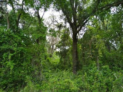 SE COUNTY ROAD 349, Lake City, FL 32025 - Photo 2