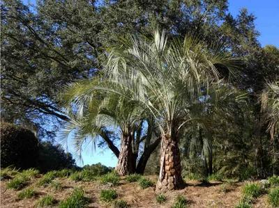 LOT 26 OAKWOOD WAY, Pinetta (Madison County), FL 32350 - Photo 2