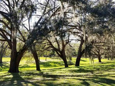 LOT 4 OAKWOOD WAY, Pinetta (Madison County), FL 32350 - Photo 2