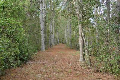 XXX SW DELRAY AVENUE, GREENVILLE, FL 32331 - Photo 2