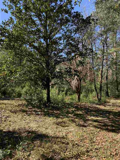 199 LEWIS DR, PERRY, FL 32348 - Photo 2
