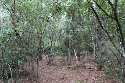 VACANT NE TIMBER RIVER LOOP, LEE, FL 32059 - Photo 1