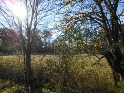 5019 W COUNTY ROAD 300 N, Sullivan, IN 47882 - Photo 2