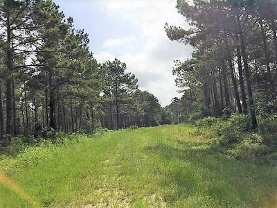 TBD FM 2501, Apple Springs, TX 75926 - Photo 2
