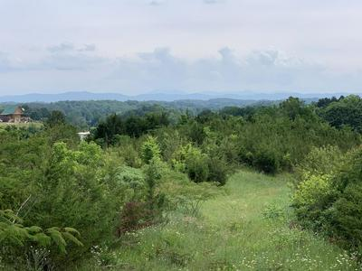 30.14 ACRE BLUE SPRINGS PARKWAY, Mosheim, TN 37818 - Photo 1