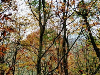 16 HIGHWAY 143, Roan Mountain, TN 37687 - Photo 2
