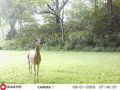 937 LURAY ROAD, Nickelsville, VA 24271 - Photo 1