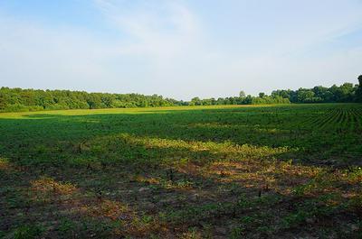 000 COCHRAN RD., GREENFIELD, TN 38230 - Photo 2