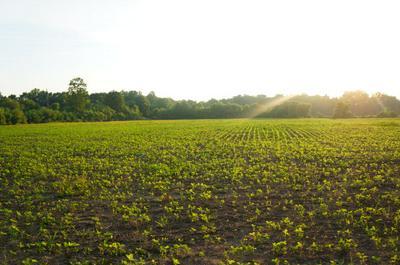 000 COCHRAN RD., GREENFIELD, TN 38230 - Photo 1