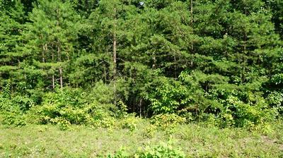 LOT 22 WALLACE WAY, Clarkrange, TN 38553 - Photo 1