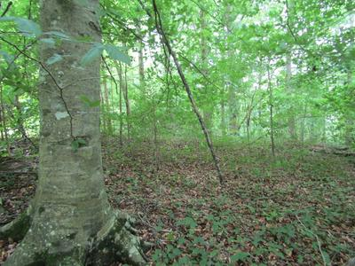 .82 AC. RUE DES RINDLER ROAD, ALPINE, TN 38543 - Photo 2