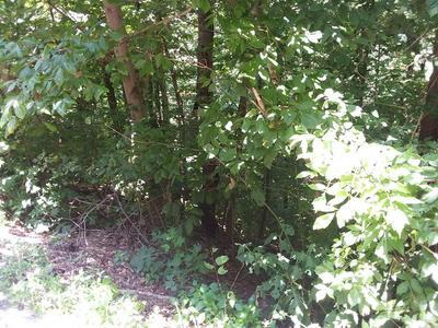 LOT 126 LAKE VIEW DR., SMITHVILLE, TN 37166 - Photo 1