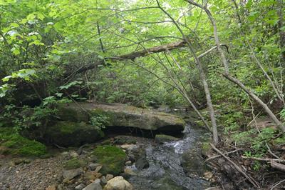 LOT26, Clarkrange, TN 38553 - Photo 2