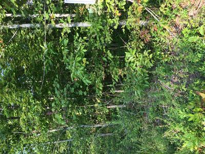 LOT 87 PARKSTOWN RD, WILDER, TN 38589 - Photo 2