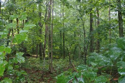 LOT 45 N SHADY LANE LOOP, Clarkrange, TN 38553 - Photo 2