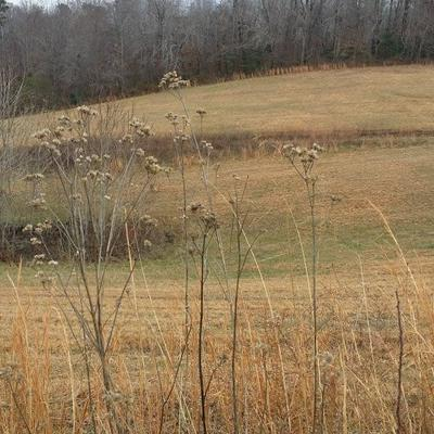 LOT 8 N SABRE PARK RD, ALPINE, TN 38543 - Photo 2