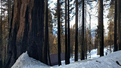55114 ALDER DR, Sequoia Crest, CA 93265 - Photo 2
