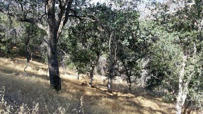 MINERAL KING ROAD, Three Rivers, CA 93271 - Photo 2