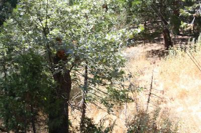 0 HIGHWAY 190, Camp Nelson, CA 93208 - Photo 2