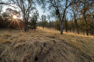 FERNDALE DRIVE, Three Rivers, CA 93271 - Photo 1