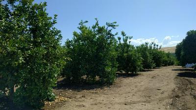 0 ROAD 272, Terra Bella, CA 93270 - Photo 1