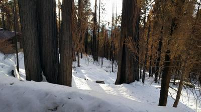 55114 ALDER DR, Sequoia Crest, CA 93265 - Photo 1