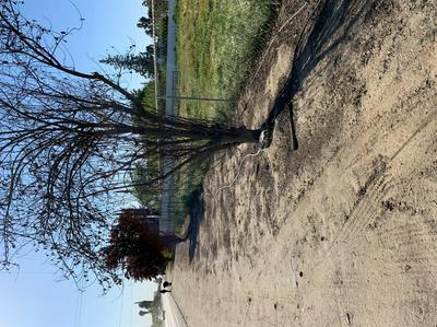 16554 AVENUE 168, Woodville, CA 93274 - Photo 2