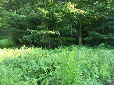 LOT 8 FOREST DRIVE, Laporte, PA 18626 - Photo 2