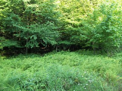 LOT 8 FOREST DRIVE, Laporte, PA 18626 - Photo 1