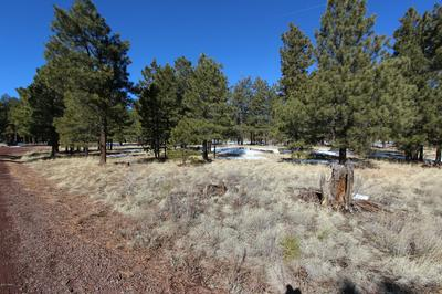#47 CO RD 1325, Greer, AZ 85927 - Photo 1