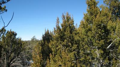 3242 JEEP TRL, Overgaard, AZ 85933 - Photo 2