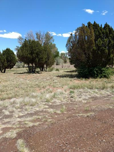 16 COUNTY ROAD 5099, Concho, AZ 85924 - Photo 2