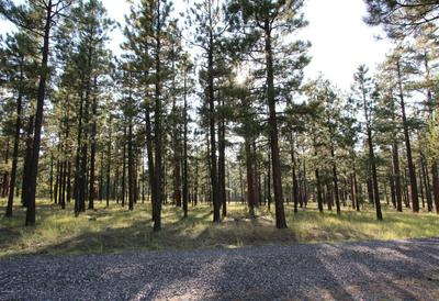 8 N N1062, Greer, AZ 85927 - Photo 1
