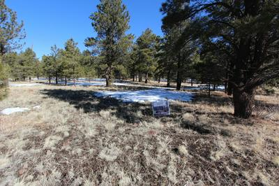 LOT 41 HIDDEN MEADOW RANCH, Greer, AZ 85927 - Photo 1