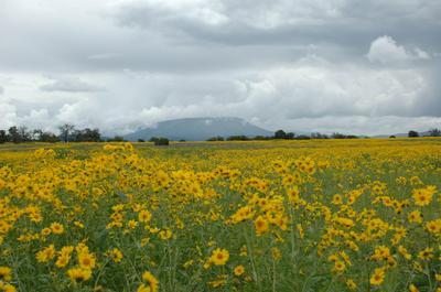 12 QUAIL RD, Quemado, NM 87829 - Photo 2