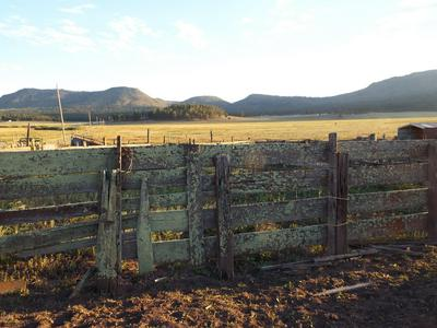 42734 HWY 180, Alpine, AZ 85920 - Photo 2