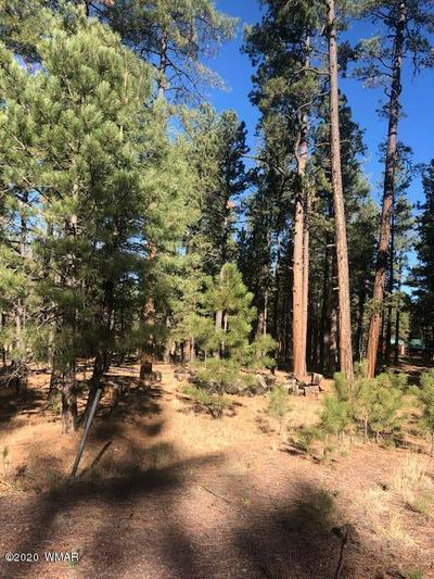 000 COUNTY RD. 2266, Alpine, AZ 85920 - Photo 2