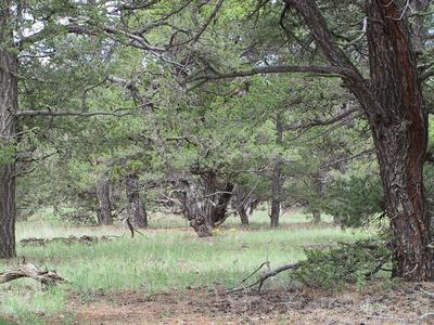 28 BUCKBOARD TRL, Quemado, NM 87829 - Photo 1