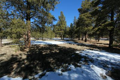 LOT 41 HIDDEN MEADOW RANCH, Greer, AZ 85927 - Photo 2