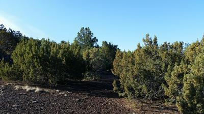 LOT 108 N RANCH ROAD, Vernon, AZ 85940 - Photo 1