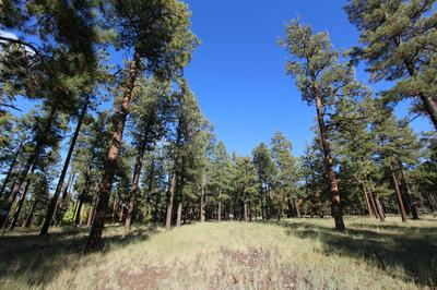 8 N N1062, Greer, AZ 85927 - Photo 2