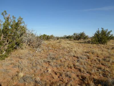 LOT 332 CCR, Heber, AZ 85928 - Photo 2
