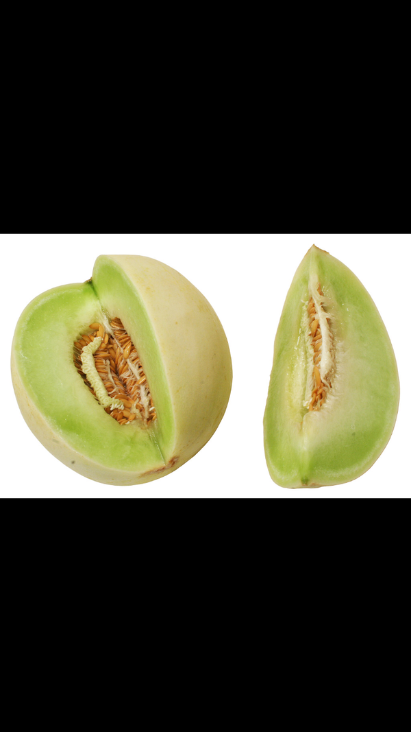 The Honeydew, or Cucumis melo