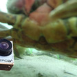 Fisherman Catches Dead GoPro, Finds Final Moments on SD Card