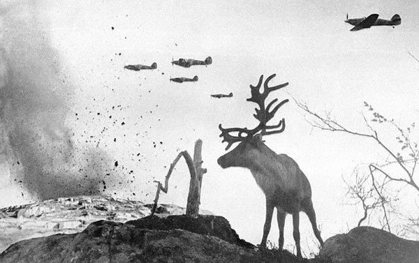 Moose caught on cam during a bombing in WWII