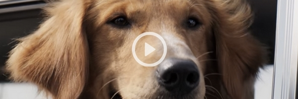 A Dog's Purpose | Official Trailer