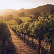 A Farm-to-Table Food Guide to Napa Valley - Culture-ist