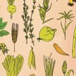 Illustrated Food Anatomy: Holiday Gift For Foodies - mindbodygreen