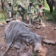 2/3 of Tanzania's Elephant Population Wiped Out by Poachers in Last 4 Years -- Can It Be Stopped?